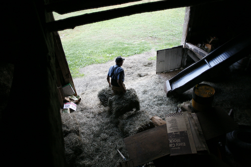 Hay (Ellis in the barn)